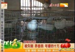 湖北浠水县龙志红养殖香鸽年赚四十万