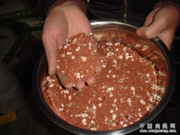 什么是种鸽保健沙?保健砂的主要成分及功能是什么