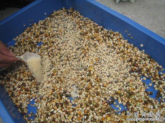 鸽子的饲料搭配和保健砂配方