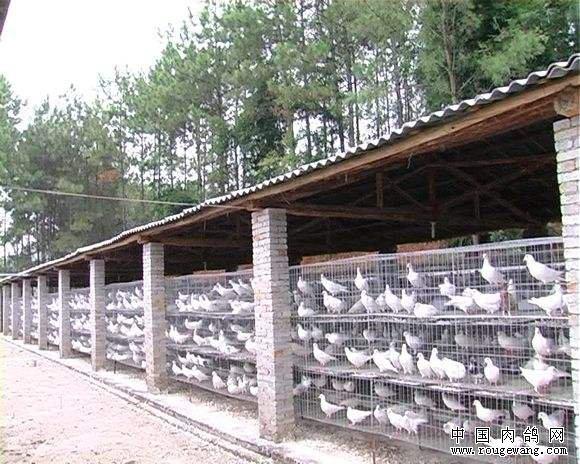 建设养鸽场选择什么地方比较好