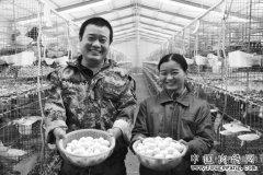 山东单县尘福丹、郭英夫妇人工孵化养殖肉鸽年入20万