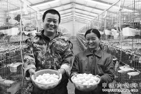 山东单县尘福丹、郭英夫妇养殖肉鸽年入20万